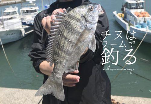 チニングはワームで釣る!おすすめの付け方、アクションを解説!