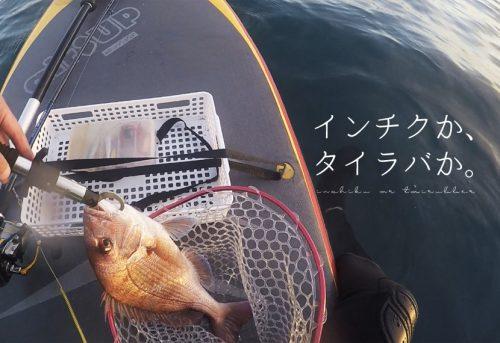 インチクVSタイラバ|仕掛けの選び方と釣り方を徹底解説