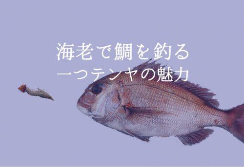 一つテンヤとエビでマダイを釣る!餌の付け方から誘い方まで徹底解説