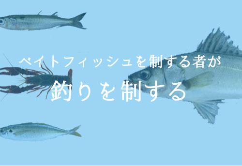 ベイトフィッシュの種類と生態を知って釣果につなげよう