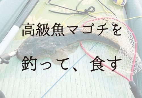 マゴチの釣り方と仕掛けを一番わかりやすく公開!