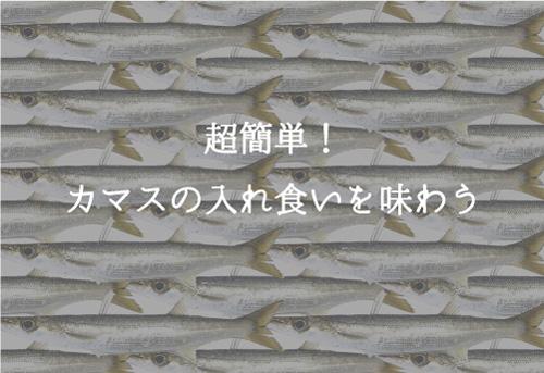 カマス釣りは超簡単!ルアーやサビキで初心者でも入れ食い
