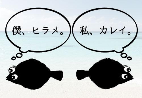 ヒラメとの見分け方イメージ