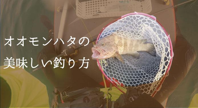 オオモンハタは釣ってよし!食べてよし!釣り方から捌き方まで
