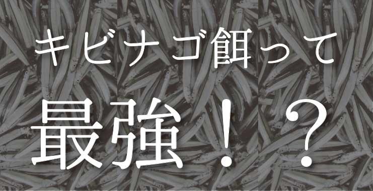 キビナゴ餌の釣りこそ最強!真鯛からハタ、太刀魚まで釣れる仕掛けを公開