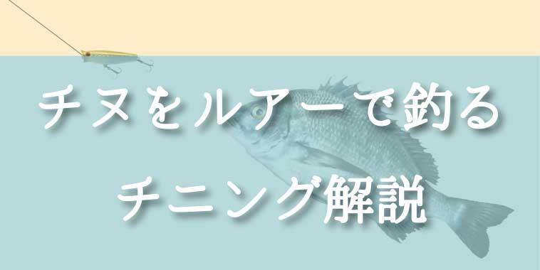 チヌ(クロダイ)をルアーで釣る!チニングの釣り方講座
