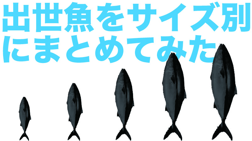 出世魚の一覧|カンパチ、ハマチなどサイズ別まとめ